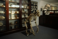 D'Arcy Thompson Zoology Museum thumbnail