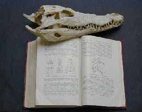 crocodile skull and book