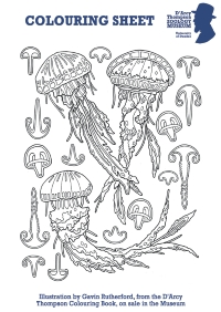 Colouring Sheet Jellyfish