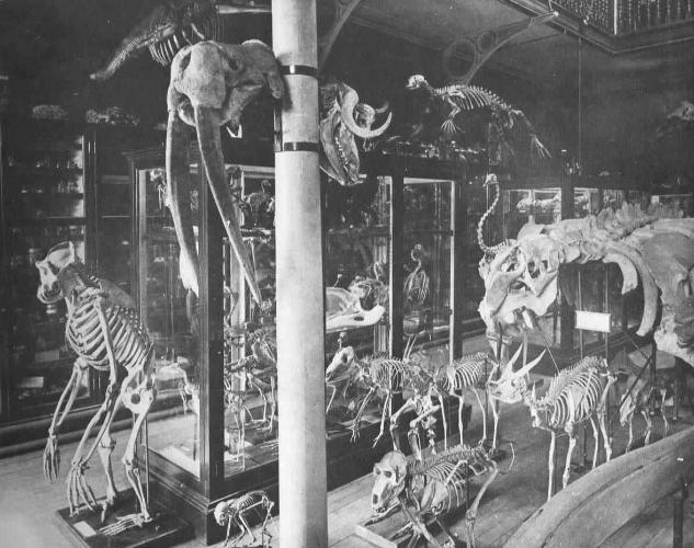 the original zoology museum