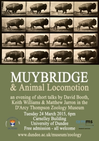 Muybridge event poster